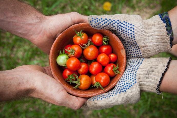 dia-mundial-veganismo-novembro